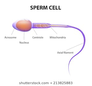 Label a sperm cell