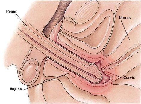 Penis and vagina pics