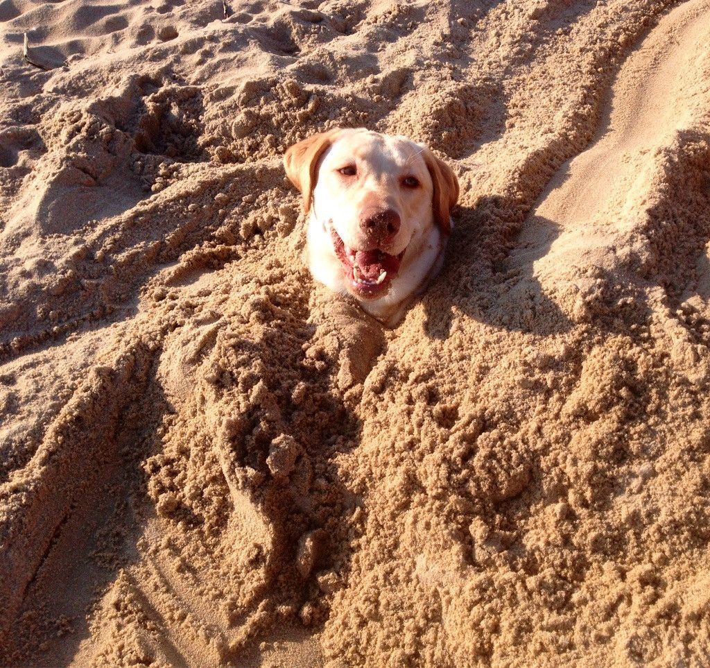 Sabertooth reccomend Fetish buried in sand
