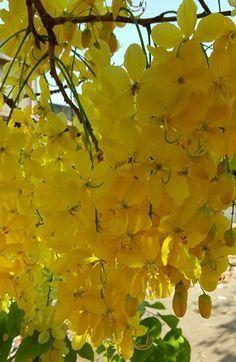 Free golden shower thumbnail