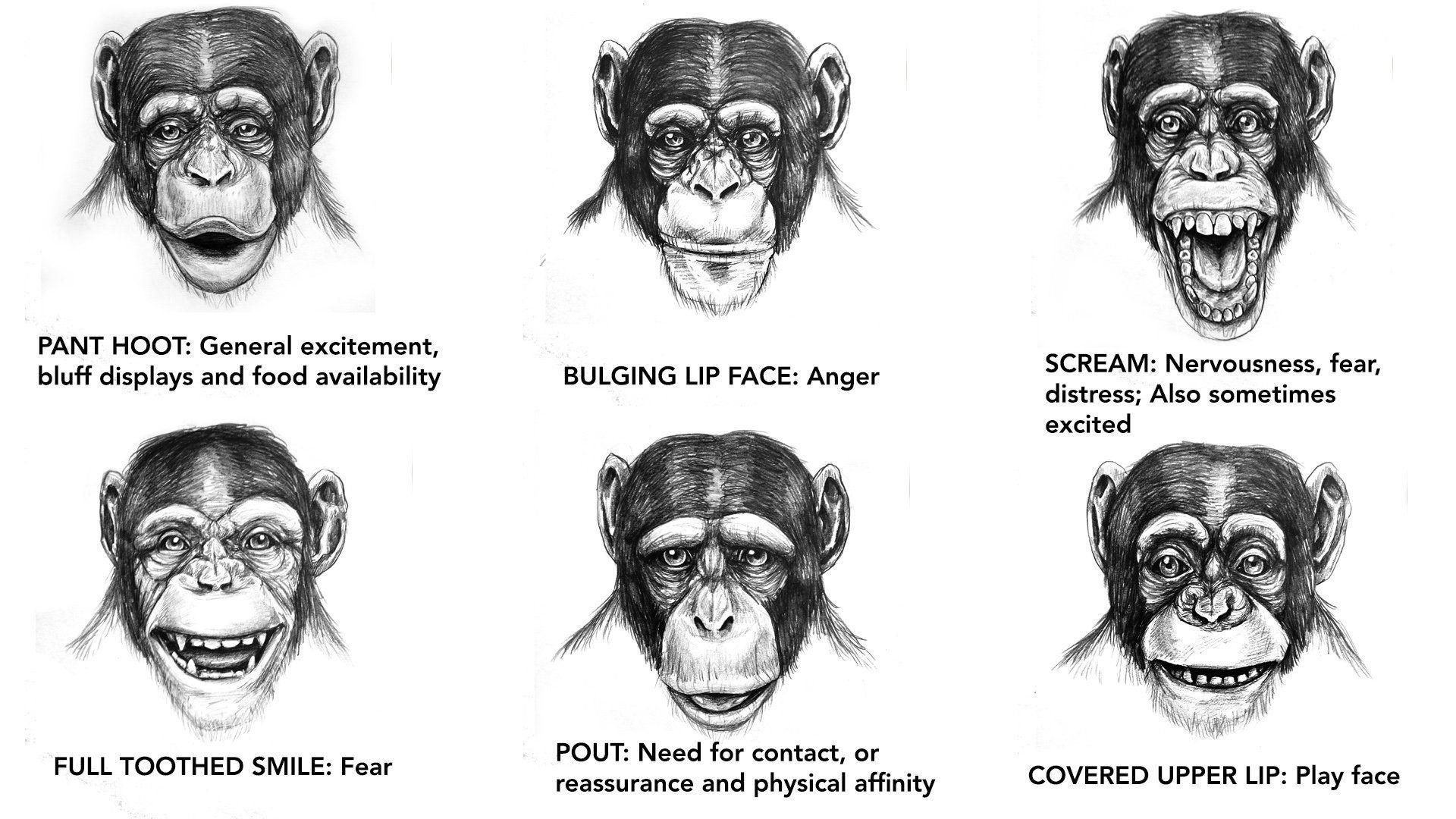 Creature reccomend Chimp facial expressions