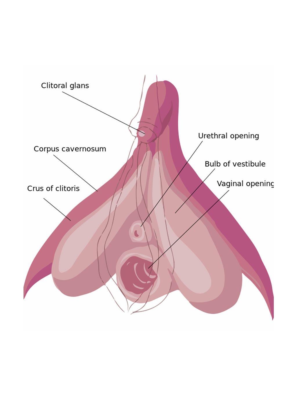 Help me find a clitoris