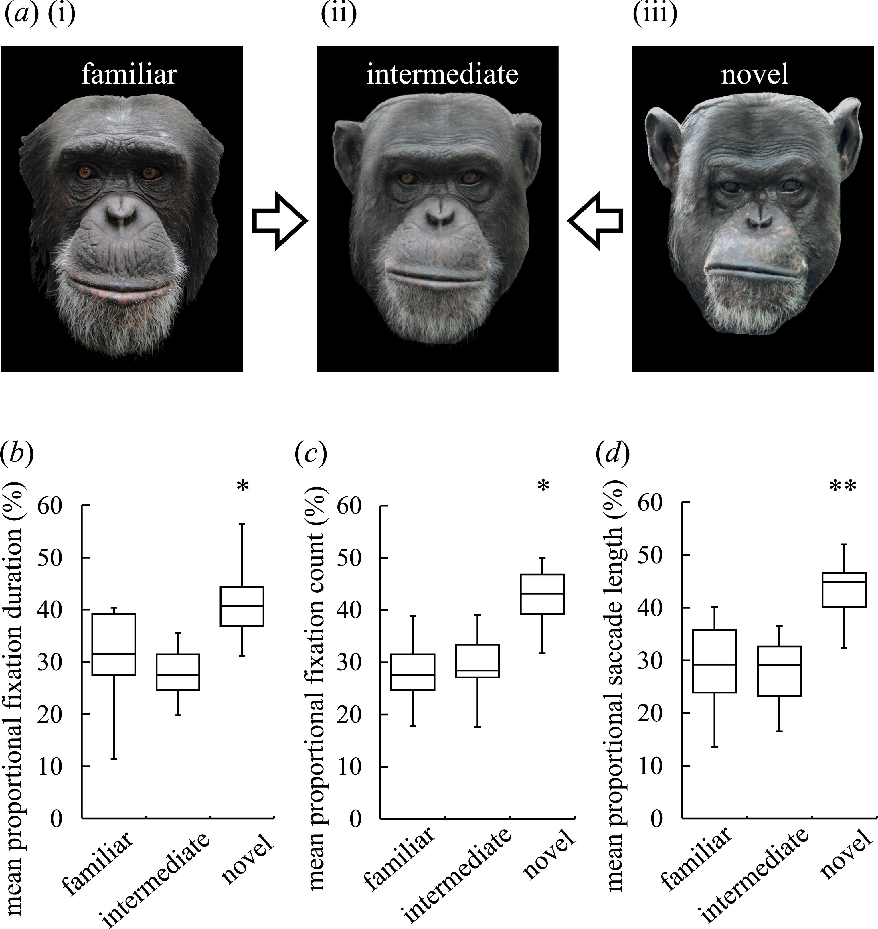 Austin reccomend Chimp facial expressions