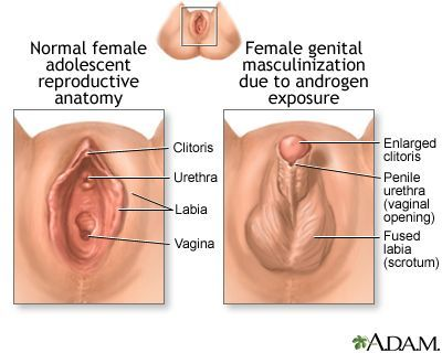 on Steroid clitoris effect
