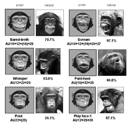Venus reccomend Chimp facial expressions