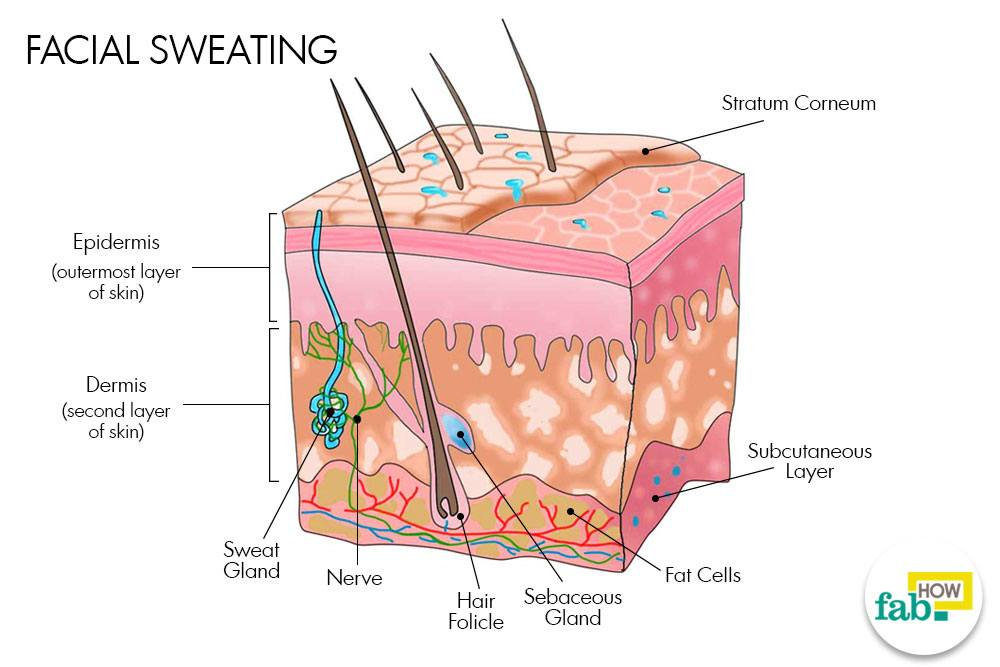 Facial sweat secretion