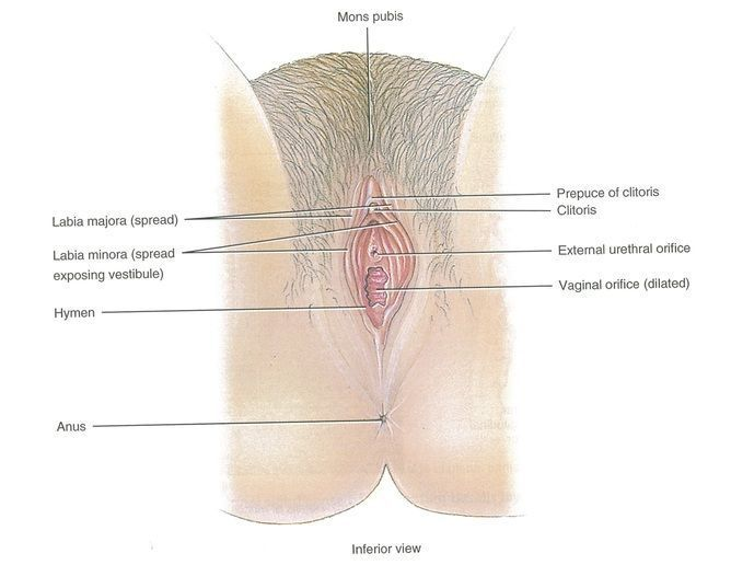 best of Clitoris find a Help me