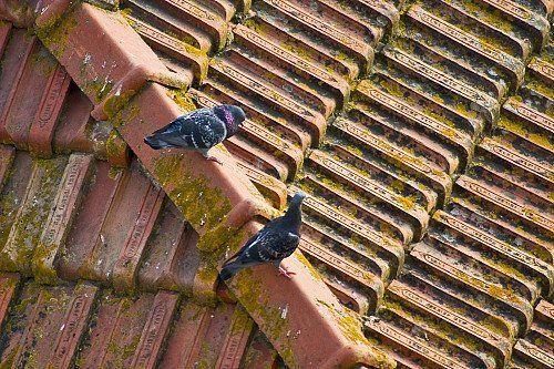 The E. Q. reccomend Home inspection shingles amateur instal
