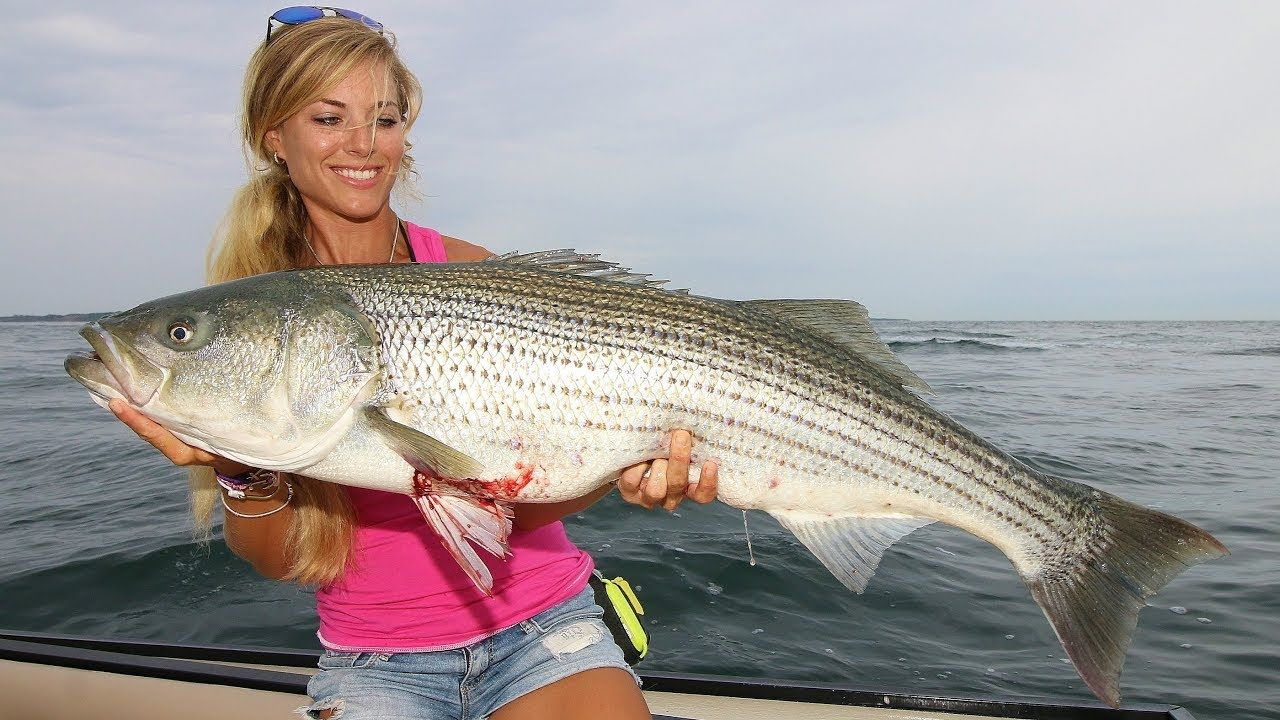 Dreads reccomend Striped bass fish